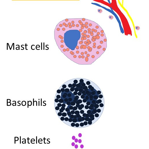 Chemical Mediators of Inflammation: HISTAMINE & SEROTONIN