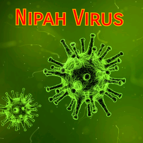 All you want to know about Nipah Virus Infection